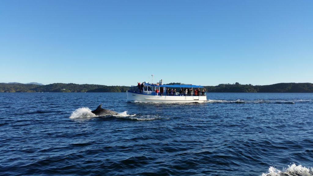 Ulva Island Ferry and dolphins in Patterson Inlet
