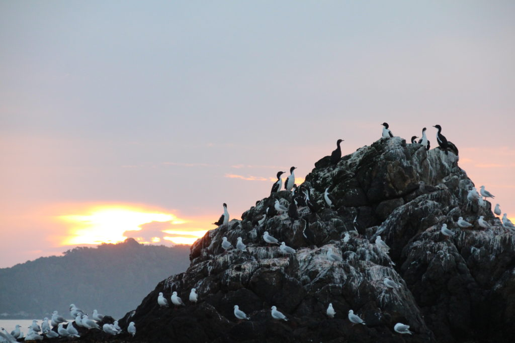 Cormorants roosting at sunset