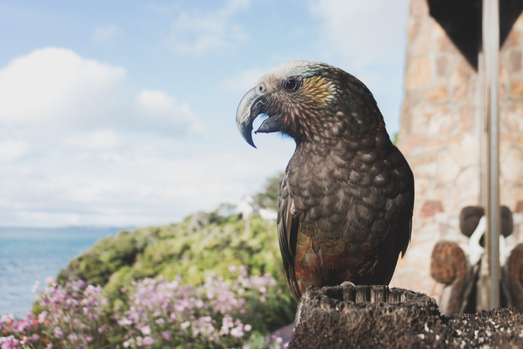 Kaka bird: Give us a squawk for a customised booking!
