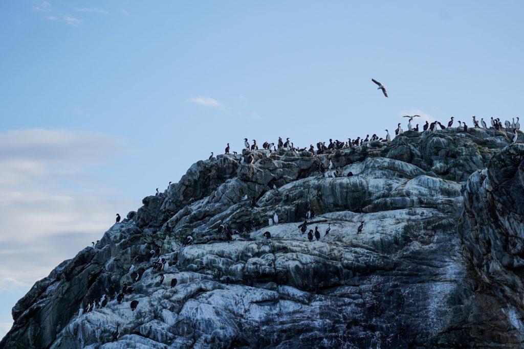 Cormorant rookery, Stewart Island