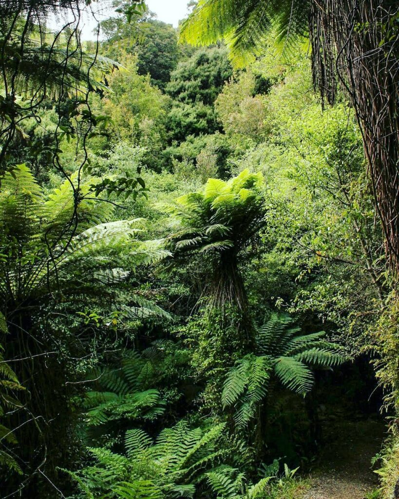 Lush bush and ferns on the Rakiura tramping track