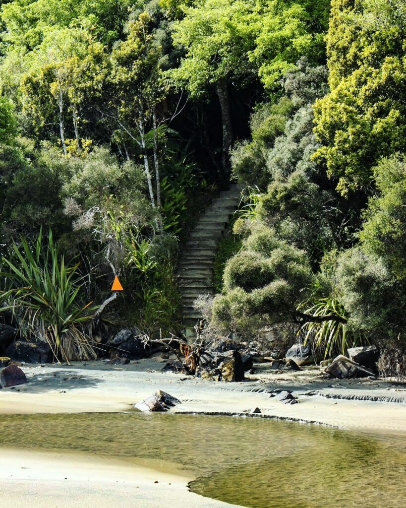 Tramping track - Rakiura Great Walk